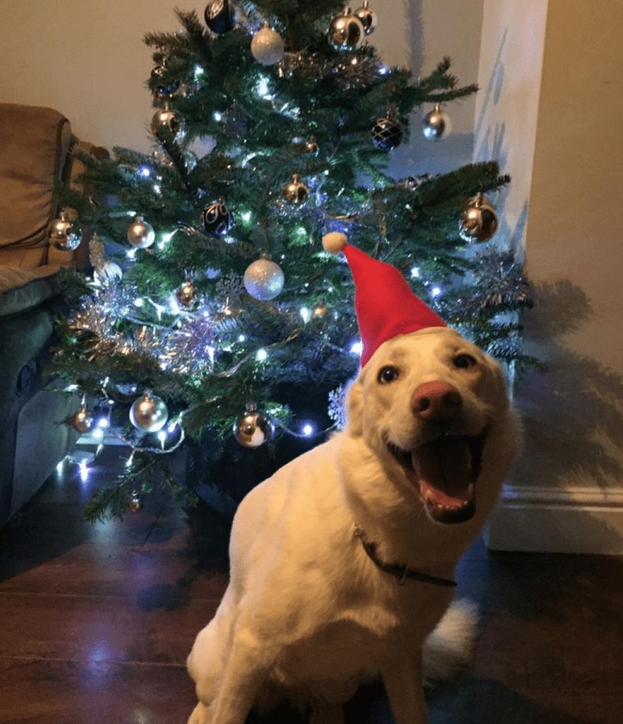 Dog at Christmas